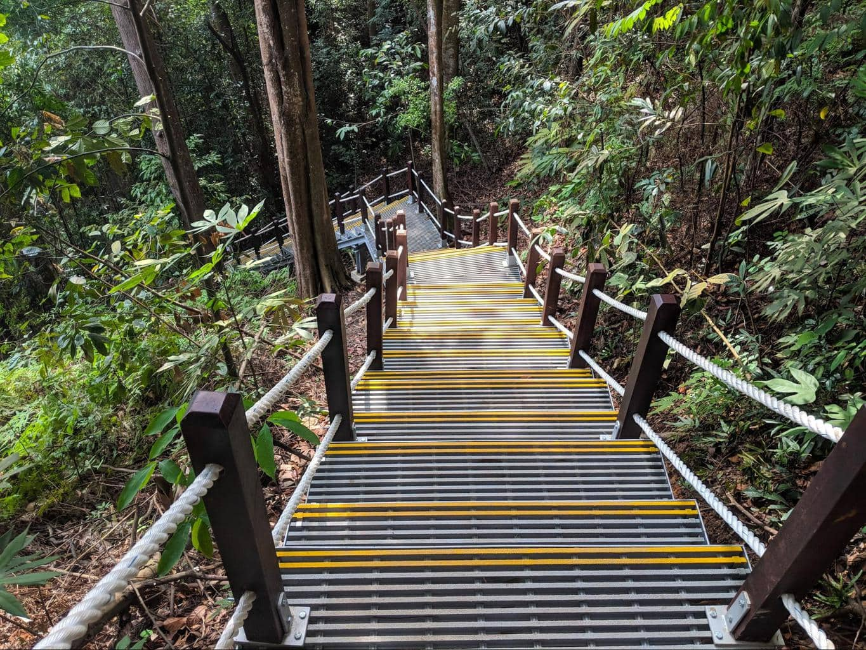 Bukit Timah Nature Reserve stairs