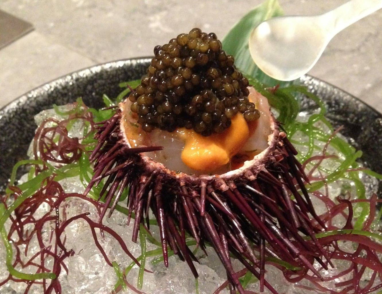 Sea urchin at Waku Ghin