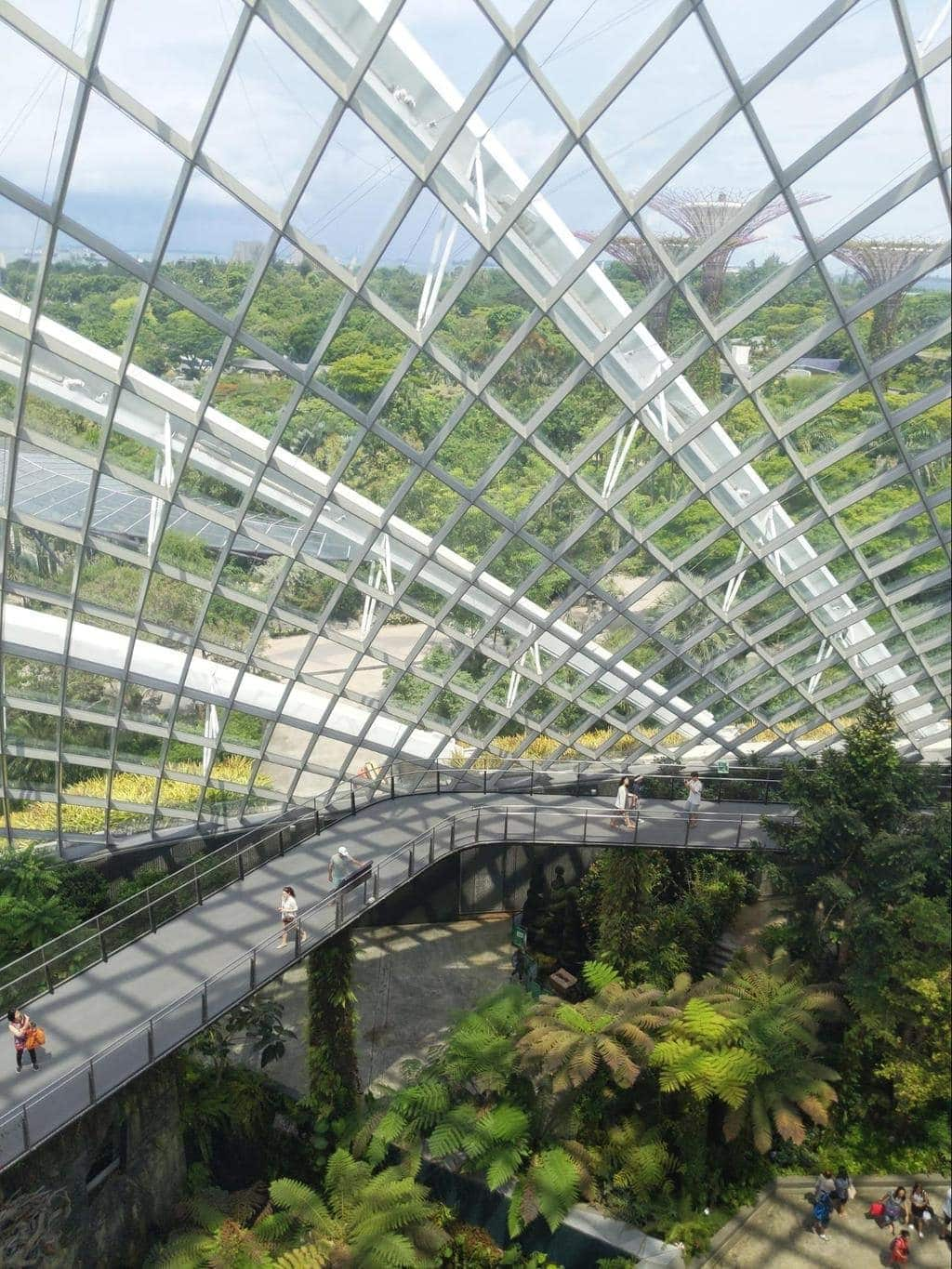View from Cloud Forest waterfall at GBS