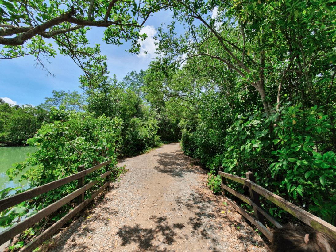 Walking the paths at Chek Jawa Wetlands