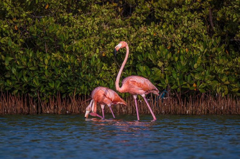 Flamingo Couple