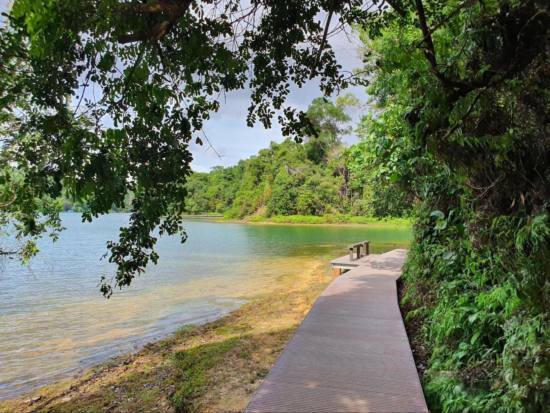 Hiking trails in Singapore through MacRitchie Reservoir boardwalk trails
