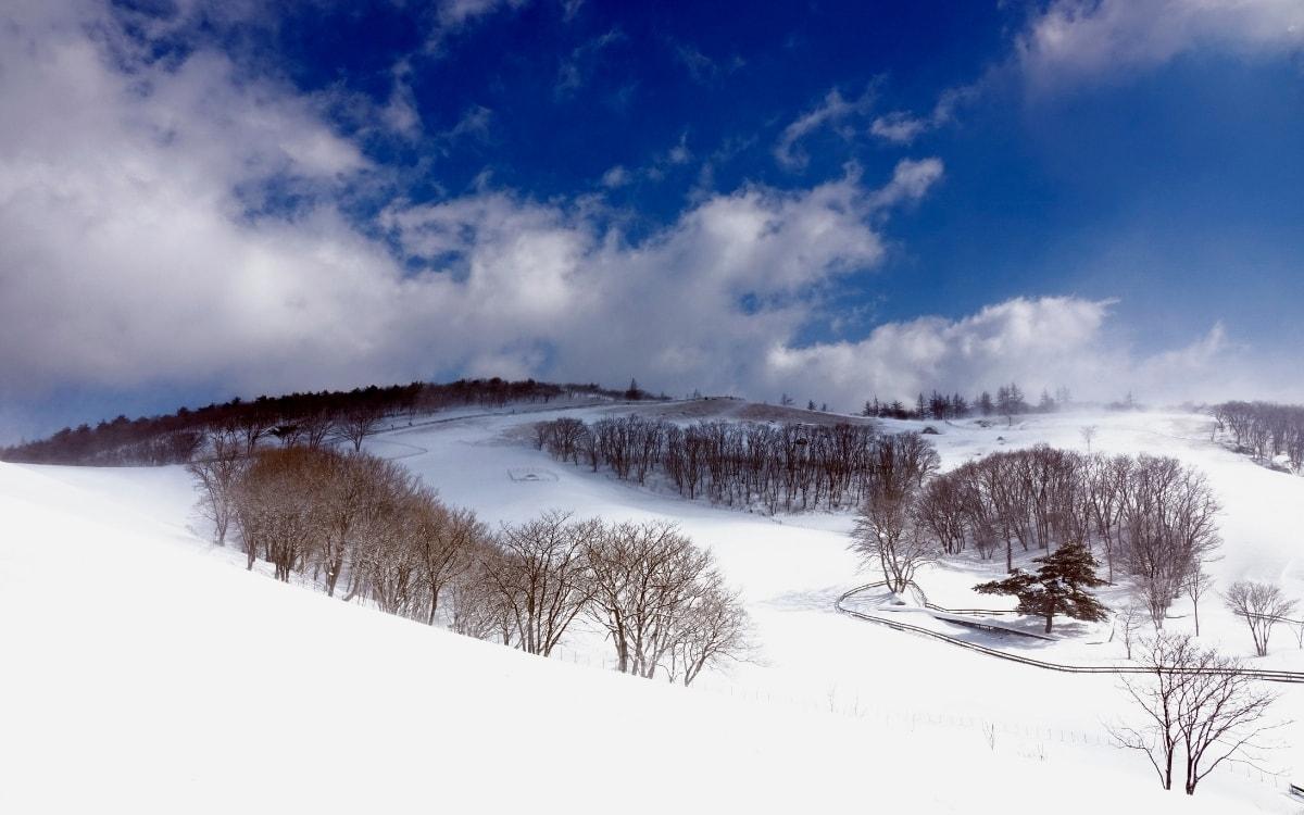 Untouched snow in Daegwallyeong sheep farm