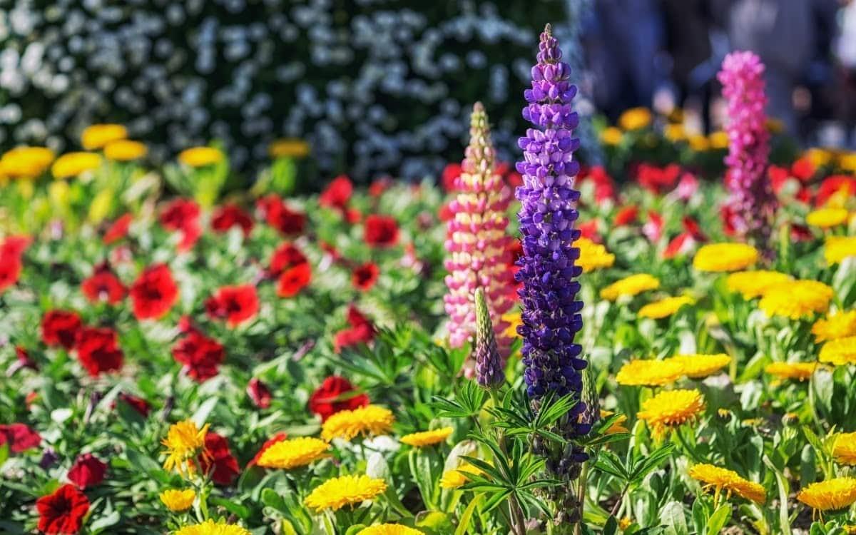 Goyang International Flower Festival