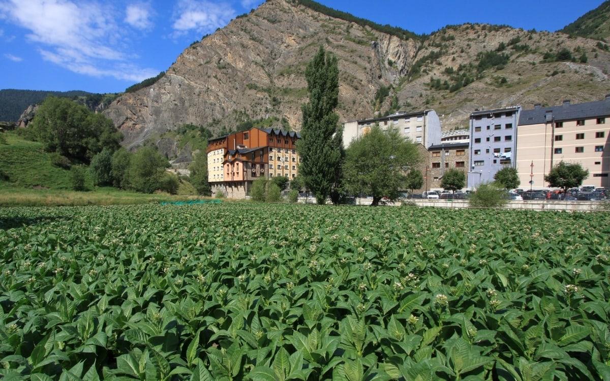 Tobacco plantation in Andorra