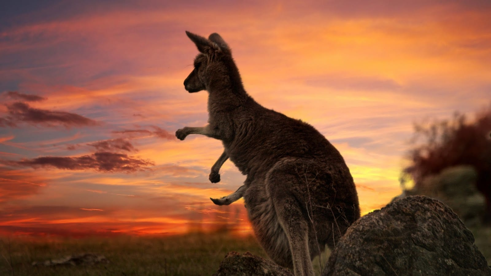 Considering if and how to move to Australia? Here is a quick guide to figure out if you're eligible and how to plan your trip.