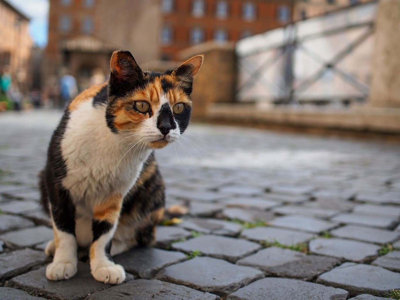 Protected street cat in Rome