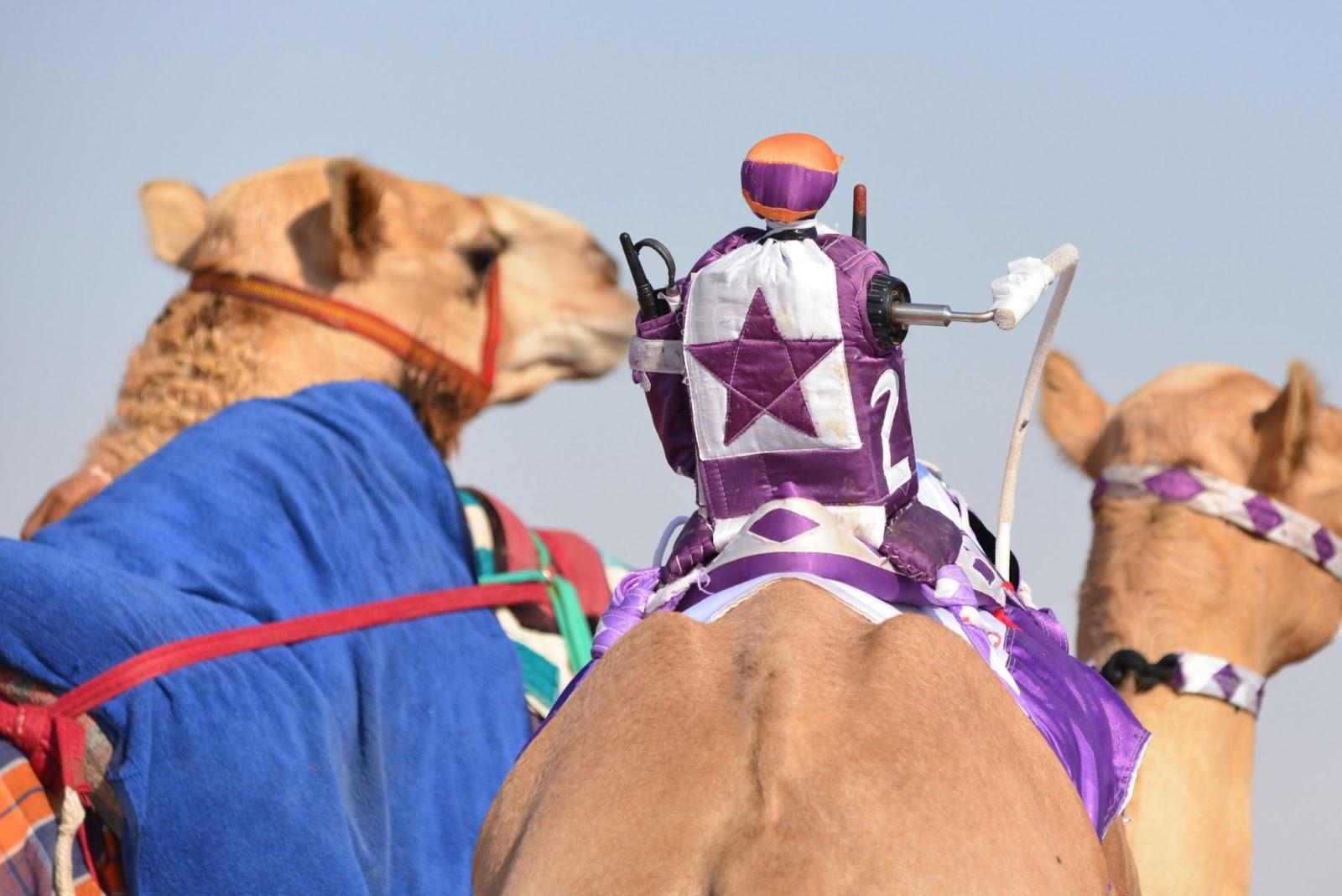 Robot camel jockey in Dubai